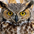 Great Horned Stare by Michael Morse