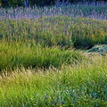 Great Marsh Grass by Susan Cole Kelly