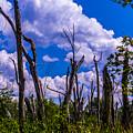Great Meadow by Jasmin Hrnjic