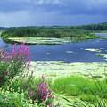 Great Meadows National Wildlife Refuge by John Burk