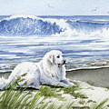 Great Pyrenees At The Beach by David Rogers