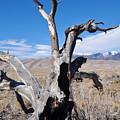 Great Sand Dunes National Park Fallen Tree Portrait by Kyle Hanson
