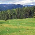 Great Smoky Mountains Deer Grazing In Field by John Burk