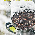 Great Tit In The Snow Card by Terri Waters