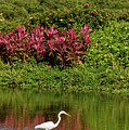 Great White Egret Fishing In A Pond With Tropical Plants And Sie by Reimar Gaertner