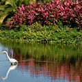 Great White Egret Hunting In A Pond In Mexico With Iguana And Re by Reimar Gaertner