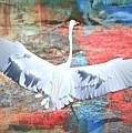 Great White Egret Landing by Diann Fisher