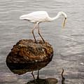 Great White Heron by Elena Elisseeva