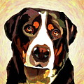 Greater Swiss Mountain Dog by Alexey Bazhan