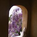 Greece Wisteria Through Arched Window by Yvonne Ayoub