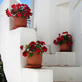 Greek Steps  by Jane Rix