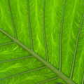 Green Abstract No. 4 by Helen Northcott