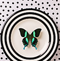 Green And Black Butterfly On Plate by Garry Gay