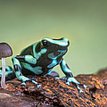 Green And Black Poison Dart Frog by Panoramic Images