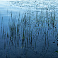 Green And Blue Serenity - Smooth Wetland Morning by Georgia Mizuleva