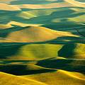 Green And Gold Acres by Todd Klassy