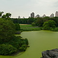 Green And Gray In Central Park by Kareem Farooq