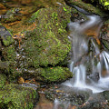 Green And Mossy Water Flow by James BO Insogna