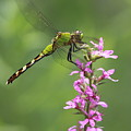 Green  And Pink by Paul Slebodnick