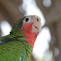 Green And Red Conure With Ruffled Feathers by DejaVu Designs