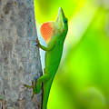 Green Anole by Rich Leighton