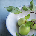 Green Apples by Sally Banfill