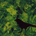 Green Bird by Robin DeLisle