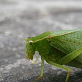 Green Bug by Mary Halpin