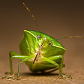 Green Bug by Tin Lung Chao