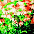 Green Butterfly by David Stasiak