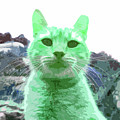 Green Cat by James Hill