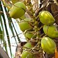 Green Coconut by Sonali Gangane