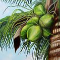 Green Coconuts- 01 by Dominica Alcantara