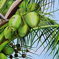 Green Coconuts-02 by Dominica Alcantara