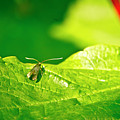 Green Creature On A Broad Leaf. by Elena Perelman