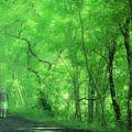 Green Creeper by Jim Love
