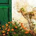 Green Door - Orange Flowers by Georgia Nick