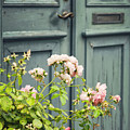 Green Door With Rosebush by Sophie McAulay