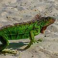 Green Dragon by David F Hunter