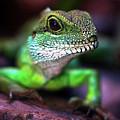Green Dragon by Jaroslaw Blaminsky