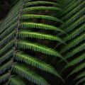 Green Dream by Graham Hughes