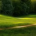 Green Dream by Lutz Baar
