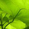 Green by Evan Pullins