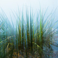 Morning At The Lake by Yulia Kazansky