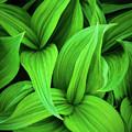 Green False Hellebore by Inge Johnsson