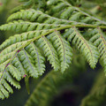 Green Fern by Kim Tran