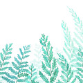 Green Fern Watercolor  by Color Color