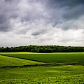 Green Fields by M G Whittingham
