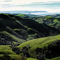 Green Fields by Robert Ardito