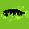Green Fish by Ed Smith